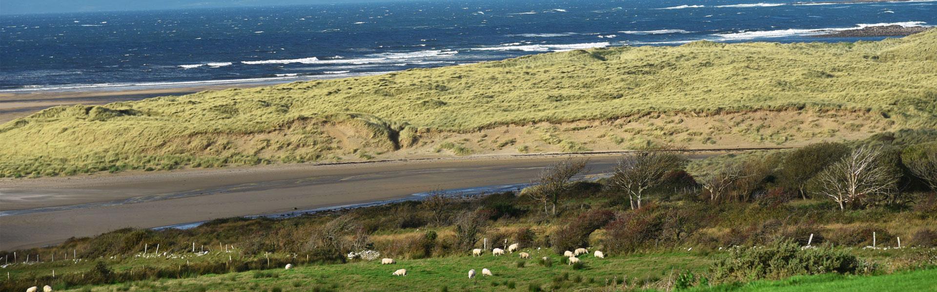 Irland Meeresalgen Bio
