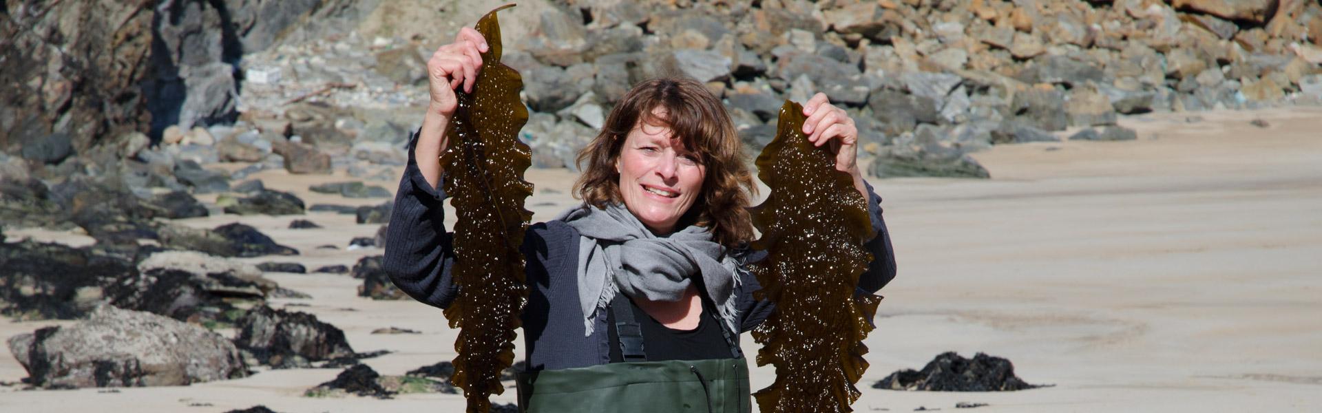 Meeresalgen Harvesting
