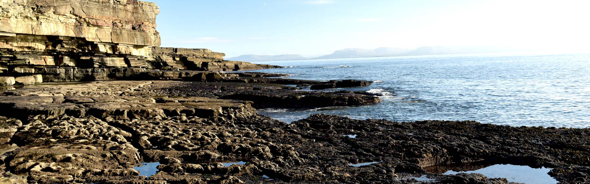 Meeresschutz Meeresalgen