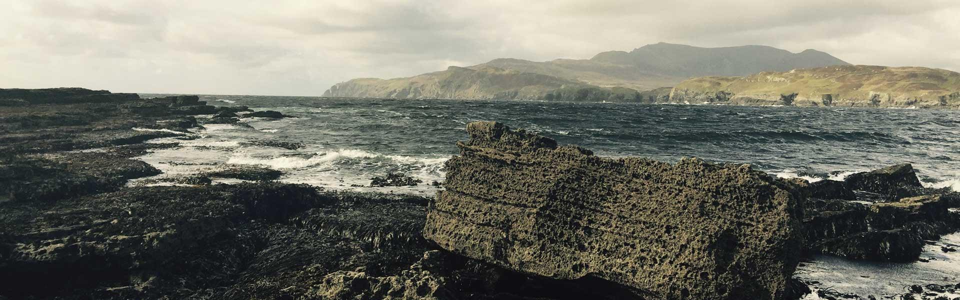 Meeresalgen Schadstoffe Irland